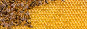 Foto-abejas-Casa-Rural-El-Vergel-de-Chilla