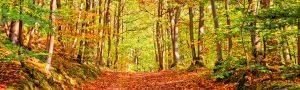 Foto-bosque-Casa-Rural-El-Vergel-de-Chilla