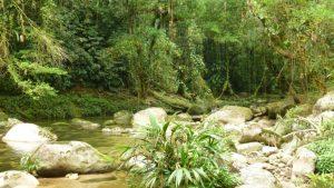 Foto-bosques-chilla-Casa-Rural-El-Vergel-de-Chilla