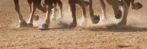 Foto-caballos-Casa-Rural-El-Vergel-de-Chilla