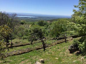 Foto-abejas48-Casa-Rural-El-Vergel-de-Chilla