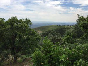 Foto-abejas53-Casa-Rural-El-Vergel-de-Chilla
