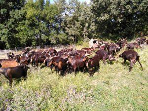 Foto-collado-gredos-Casa-Rural-El-Vergel-de-Chilla