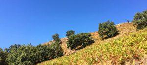 Foto-montana-Casa-Rural-El-Vergel-de-Chilla